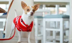 Get your pets involved for Christmas jumper day