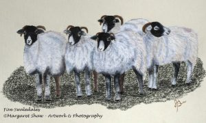 Five Swaledales, by Margaret Shaw